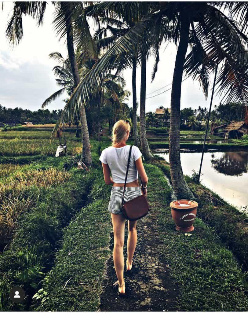pola ryżowe ubud